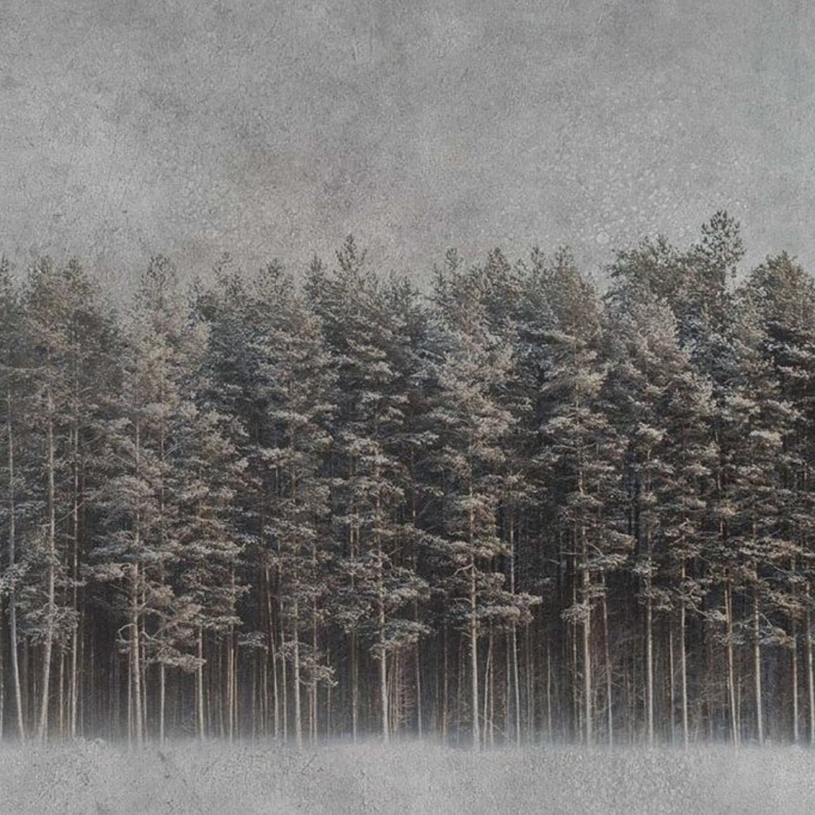 Instabilelab Wallpaper Black Forest Tattahome